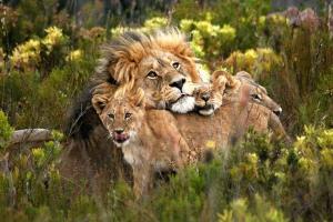 4 Days South Africa Wildlife Safari