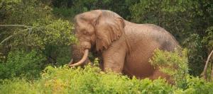 15 Days Uganda Birding Safari Tours