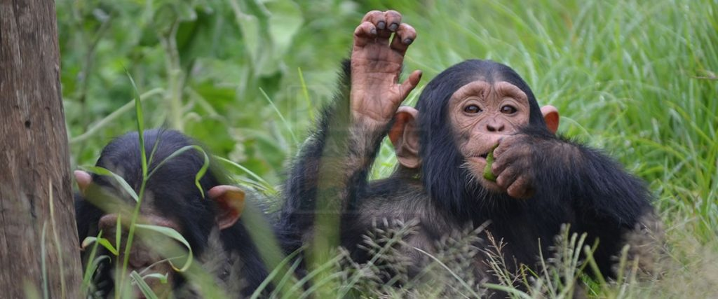 14 Days Uganda Birding Safari Tours with optional Mountain Gorilla & Chimpanzee trekking