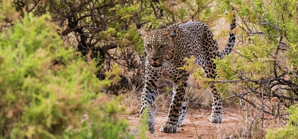 2 Days Uganda Safari in Murchison Falls/2 Days Uganda Wildlife Safari in Murchison falls National Park-Uganda Safari News