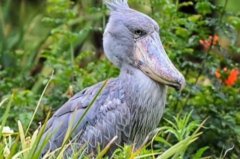 7 Days Rwanda Birding Safari Tour in Africa