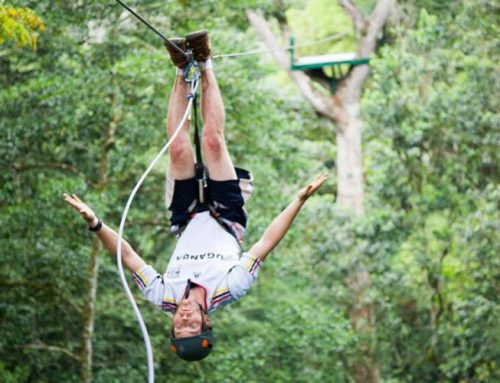 Africa's best safari forest adventure! – Africa safari News