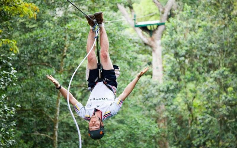 Africa's best safari forest adventure! – Africa safari News