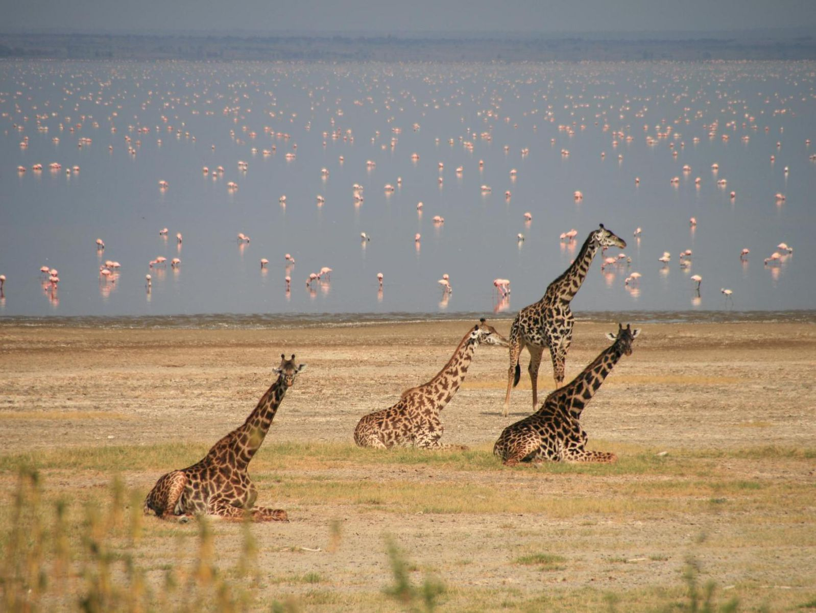 A brief Africa safari guide to Lake Manyara National Park – Tanzania safari News